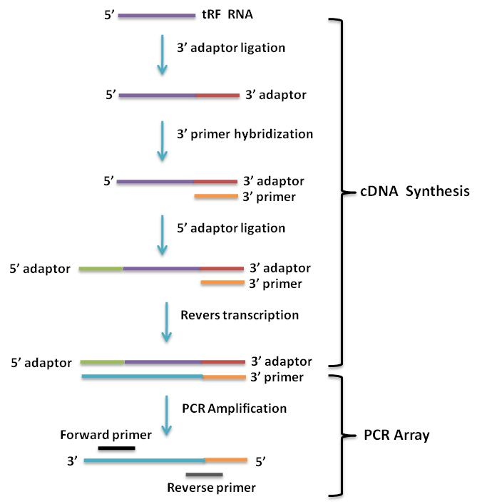 Human tRFs PCR array